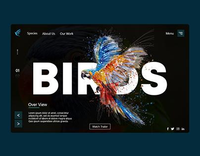 Birds Concept Website Design