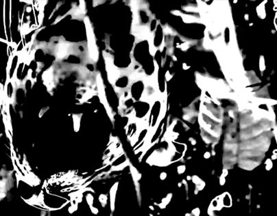 Selva Oscura, Videoinstalación (Dark Matter, 2016)