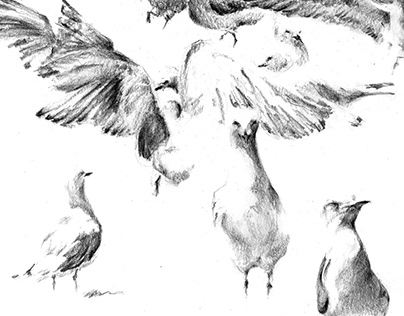 Gull squabble
