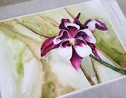 Watercolor :: Columbine