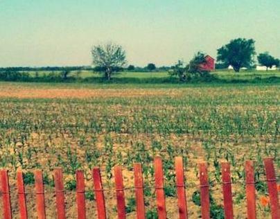 the farm album