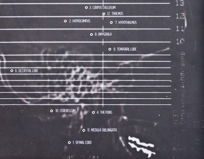 2013 Calendar - The Brain