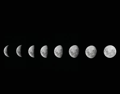 Luna Portfolio