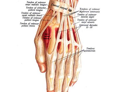 Sản phẩm Human Anatomy