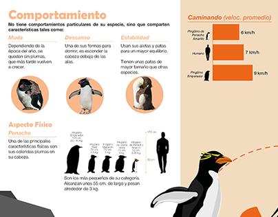 2017 - Infografía - Diseño Gráfico II - FADU