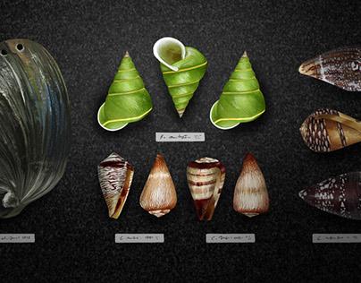 The environmental burden on a snail's shoulder