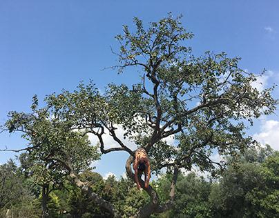 insan ağacı | human tree