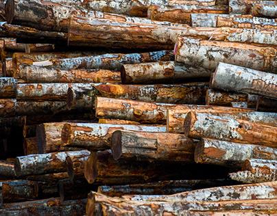 Made in Washington: Cascade Hardwood Sawmill