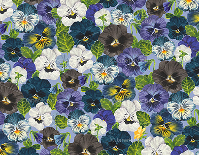 Watercolor pansy flowers- blue mix