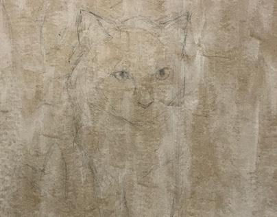 cat portrait 12-14 (beginning)