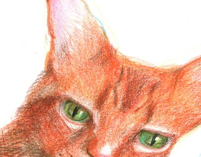 Mr. Red Cat