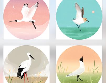 Endangerd Waterbirds