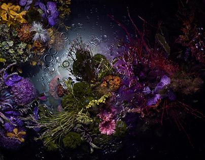 STUFF x bloom bloom FLEUR x Susan Fong | Oceania
