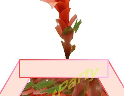 꽃 화분 꽃 / Flower pots with flowers