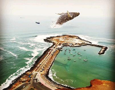 Isla ballenas, que mejor lugar!