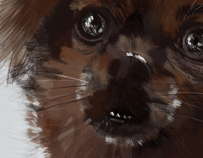 Suzy the (Senior) Dog