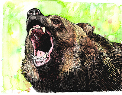 Grizzly, ink and watercolor on paper