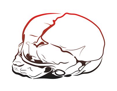 Fetal skull study