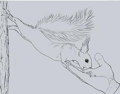 Sketches / Studies