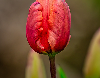 A Tulip and Two Birds - favorites from today 4/2/21