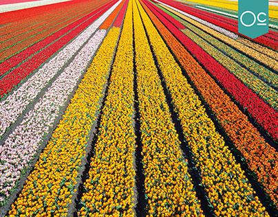 enviaflores.com Fast Flowers