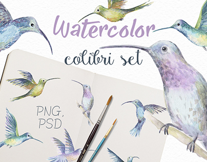Watercolor  colibri set