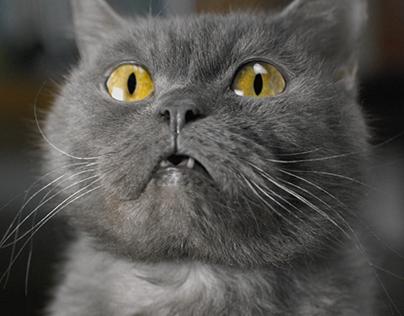 "MegaFon / ""Angry cat"" / 2015"