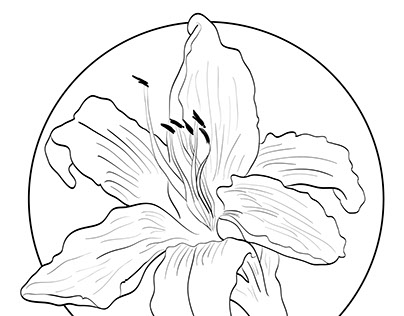Friendly Botany Field Guide (Day Lily)