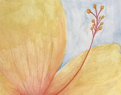 Hibiscus: Bella Rubal Period 7