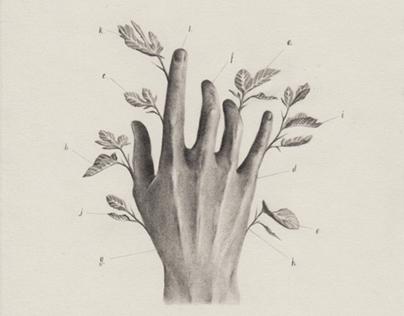 Hand Estudies / estudio de manos. 2016
