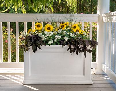 Everlasting Sunshine Planter