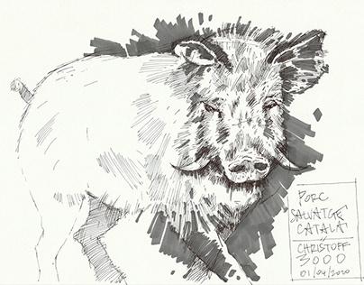 Herd Immunity #3 - Wild Boar in Barcelona