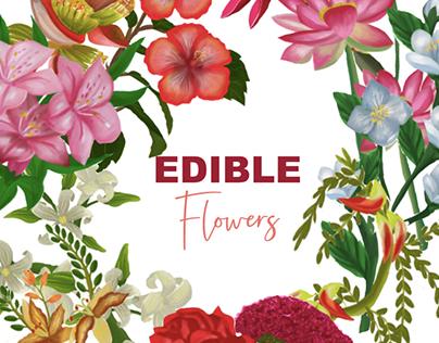 Edible Flowers Illustration for CNTraveller magazine
