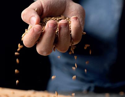 Le ricette con il grano di Enkir. Grafica editoriale