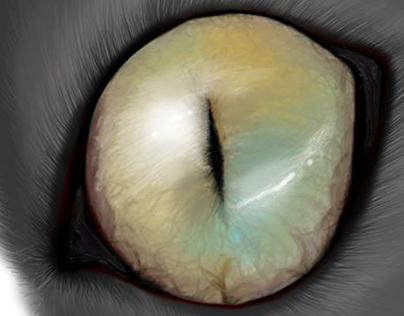 Animal anatomy: cat eye practice