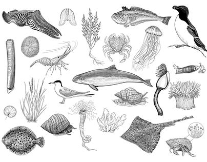 150 North Sea species for nature exhibition