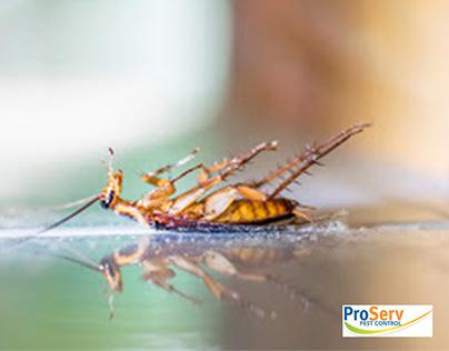 Pest Control Services Singapore