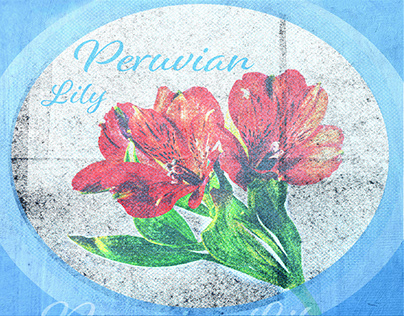 Peruvian Lily, High Key, Low Key, Texture Masking.