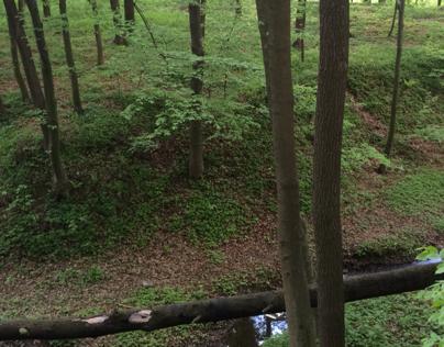 Lasek w debina