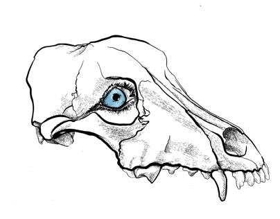 Skeleton series