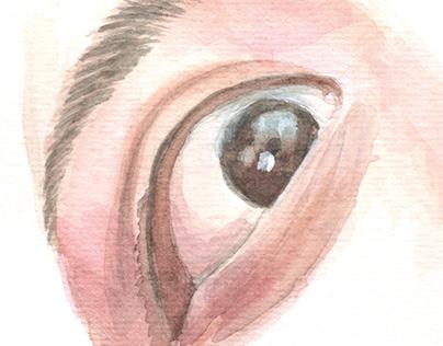 Watercolor eye studies