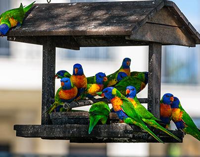 Birds of North Queensland,Australia