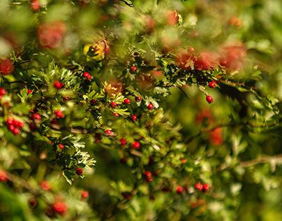 Zeit der Früchte Time of fruits