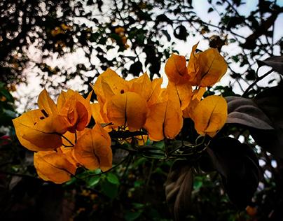 Flowers around me...
