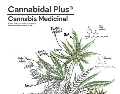 Infografía | Cannabis Medicinal