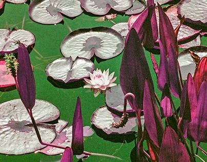 Lotus series