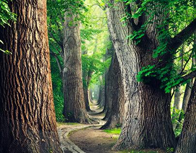 A Summer Beneath The Trees, Pt. IV