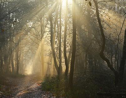 sun rays kissing the earth