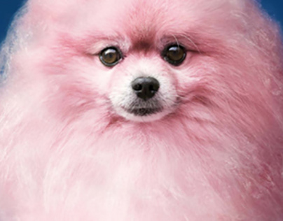VitaKraft Dog's shampoo and conditioner