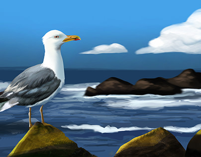 gull and sea